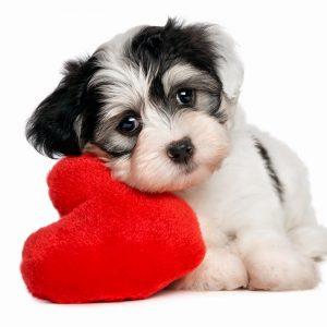 dog_heart_white_background_78807_2048x2048